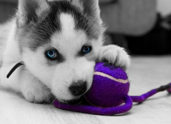 3 Ways an Animal Can Benefit Your Heart